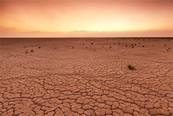 Пустыни. категория (фото 2)