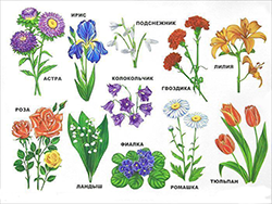 Познание мира / 4 года / Цветы | образовательный ресурс ALIMOK