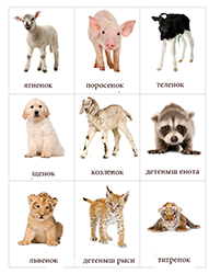 Животные I. категория (фото 1)