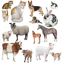 Животные I. 5лет (фото 1)
