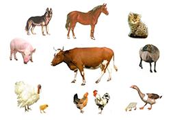 животные 5