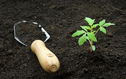 почва I