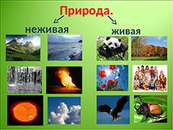 природа живая и неживая категория
