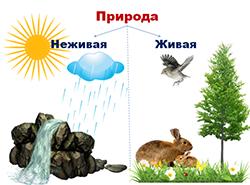 природа живая и неживая 1
