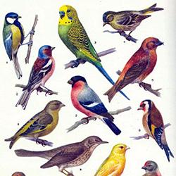 птицы 1 3года