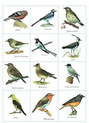 птицы 2 3года