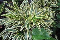 растения 2 4года