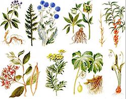растения 1 5лет