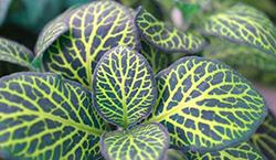 растения 4 4года