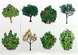 растения 2 5лет