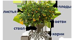Растения (деревья, кустарники, травы) I. категория (фото 1)